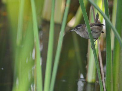 bird-gallery (1)