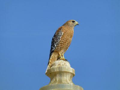 bird-gallery (10)