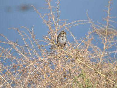 bird-gallery (18)