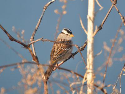 bird-gallery (19)