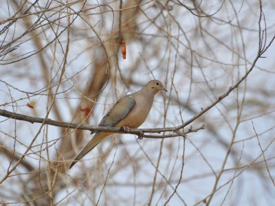 bird-gallery (2)