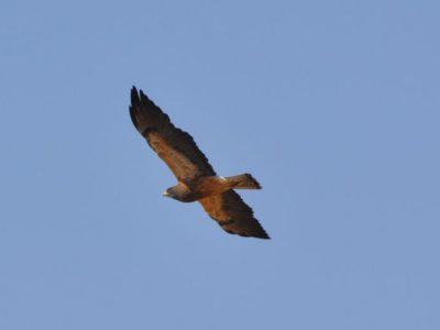 bird-gallery (20)