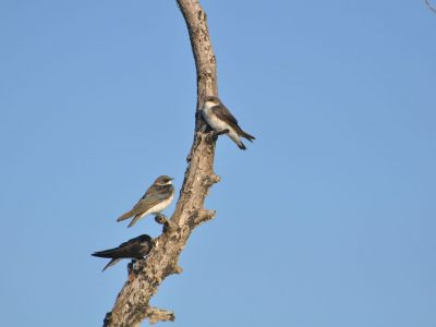 bird-gallery (23)