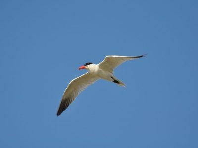 bird-gallery (24)