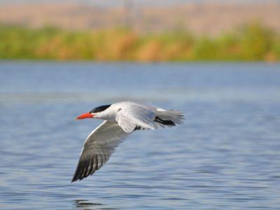 bird-gallery (25)