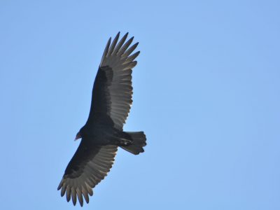 bird-gallery (29)