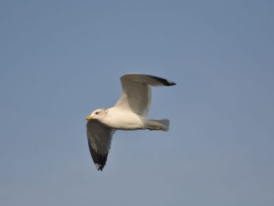bird-gallery (31)