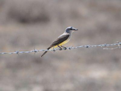 bird-gallery (32)