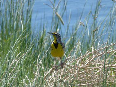 bird-gallery (33)