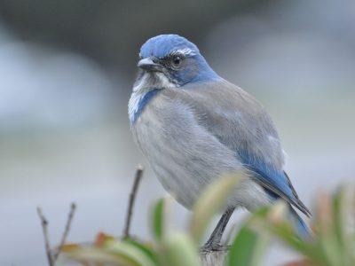 bird-gallery (34)