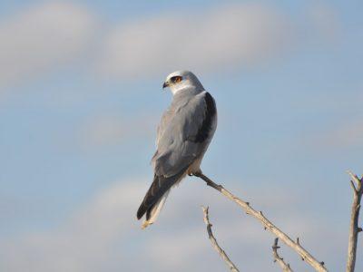 bird-gallery (36)