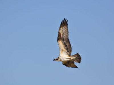 bird-gallery (4)