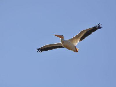 bird-gallery (43)