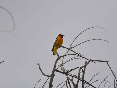 bird-gallery (46)
