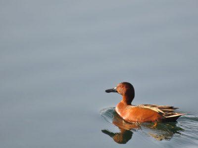 bird-gallery (48)