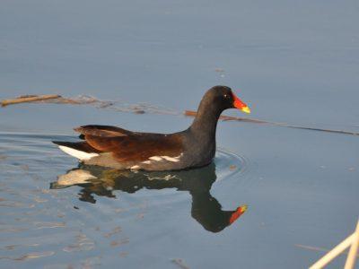 bird-gallery (49)