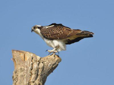 bird-gallery (5)