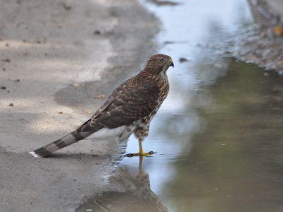 bird-gallery (50)