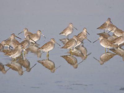 bird-gallery (53)
