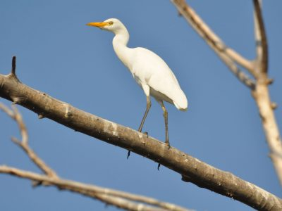 bird-gallery (54)