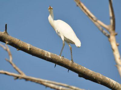 bird-gallery (55)