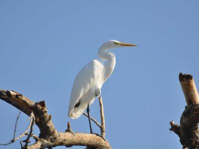 bird-gallery (56)