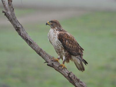 bird-gallery (58)
