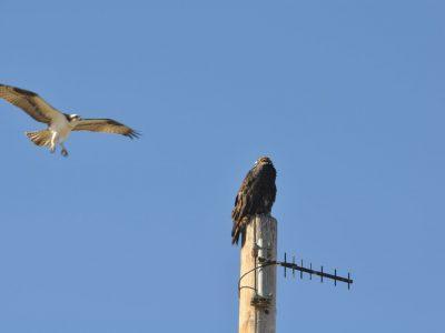 bird-gallery (61)