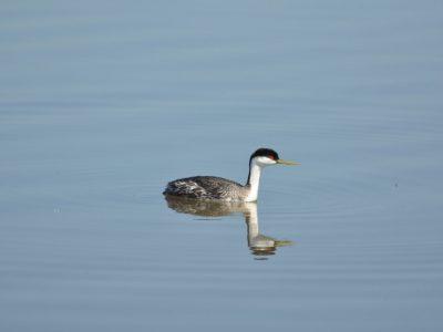 bird-gallery (66)