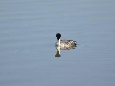 bird-gallery (67)