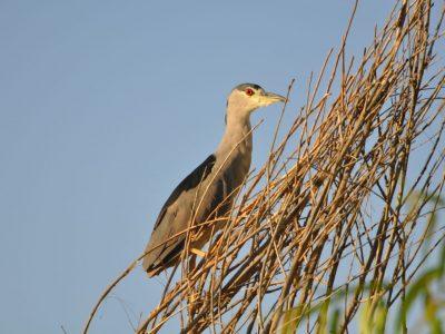 bird-gallery (68)