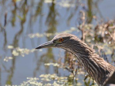 bird-gallery (69)