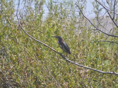 bird-gallery (71)