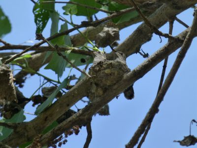 bird-gallery (72)