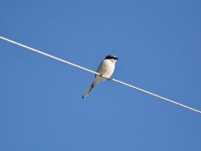 bird-gallery (74)