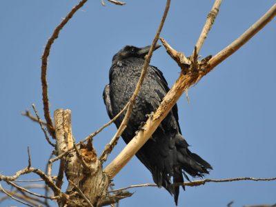 bird-gallery (8)