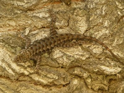 reptiles-gallery (1)